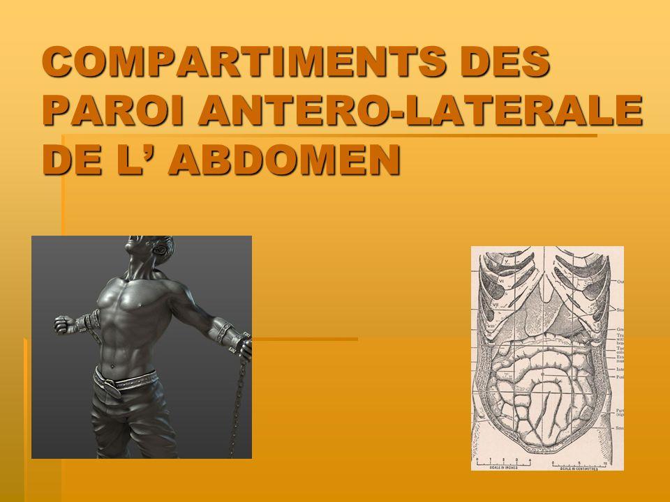 COMPARTIMENTS DES PAROI ANTERO-LATERALE DE L' ABDOMEN