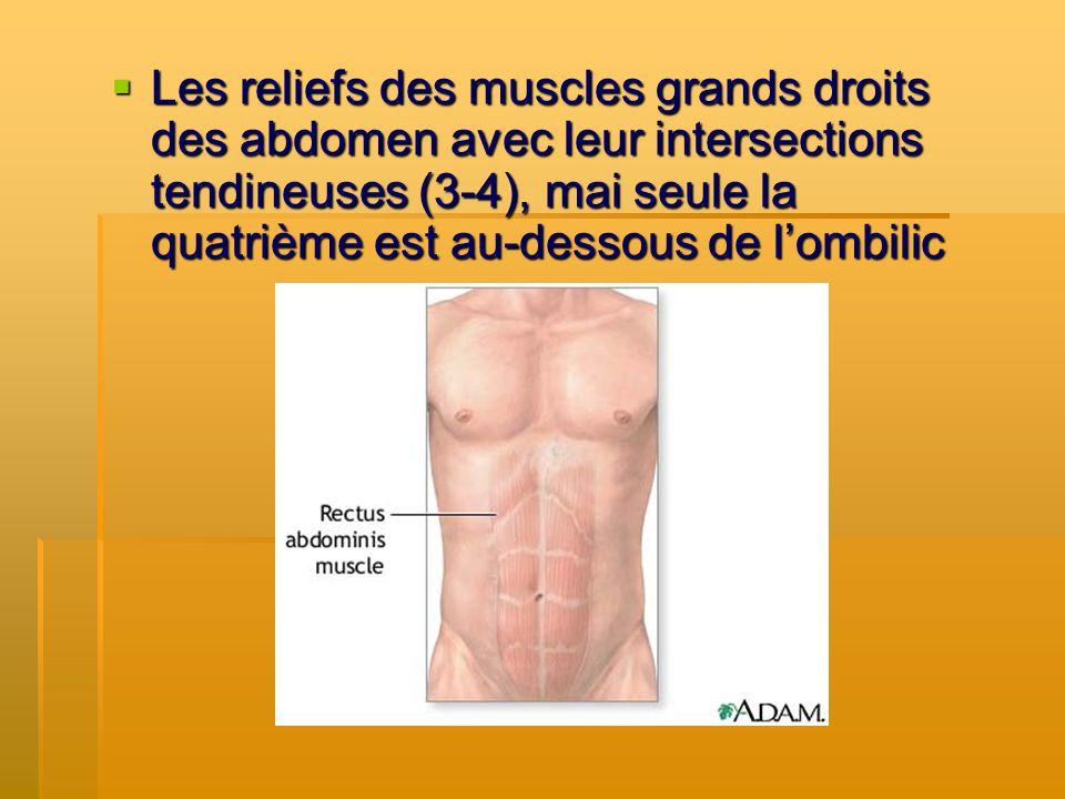 Les reliefs des muscles grands droits des abdomen avec leur intersections tendineuses (3-4), mai seule la quatrième est au-dessous de l'ombilic