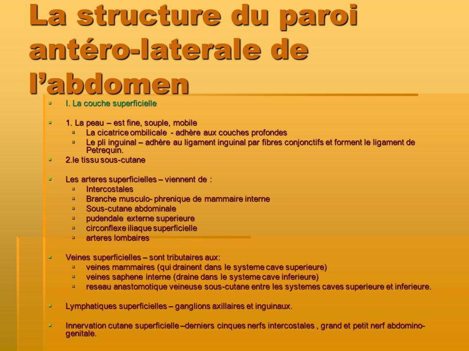 La structure du paroi antéro-laterale de l'abdomen
