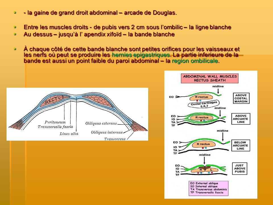 - la gaine de grand droit abdominal – arcade de Douglas.