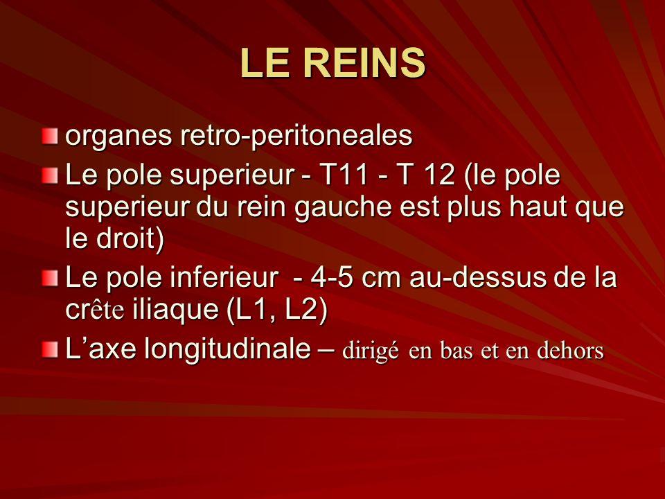 LE REINS organes retro-peritoneales