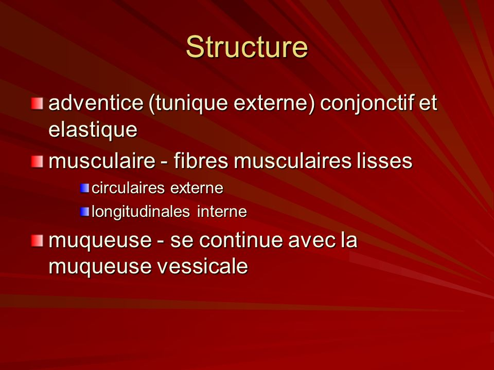 Structure adventice (tunique externe) conjonctif et elastique