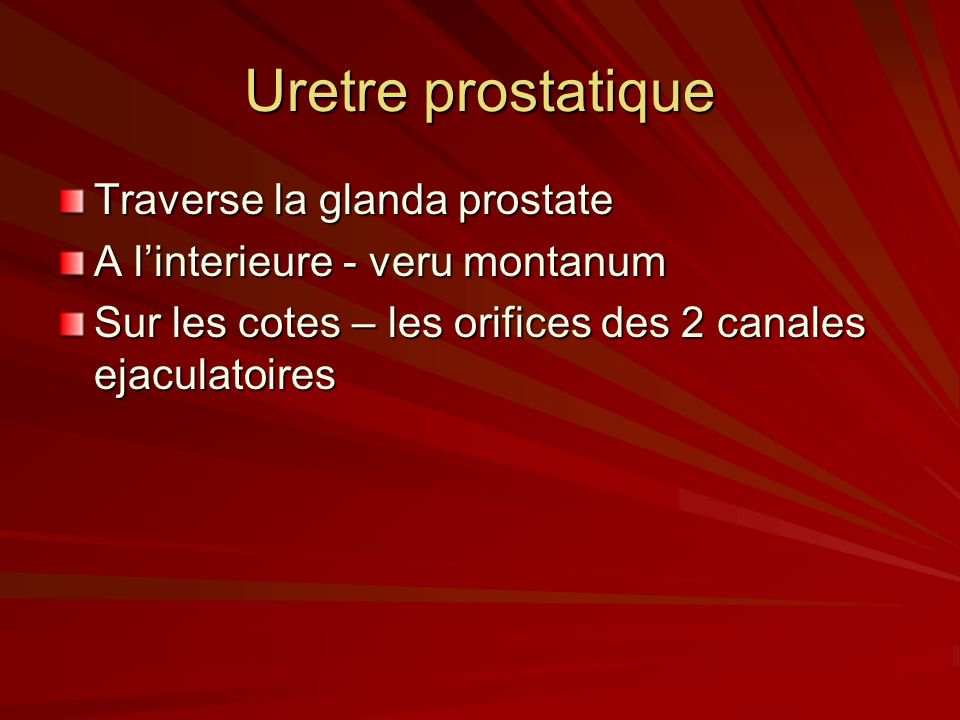 Uretre prostatique Traverse la glanda prostate