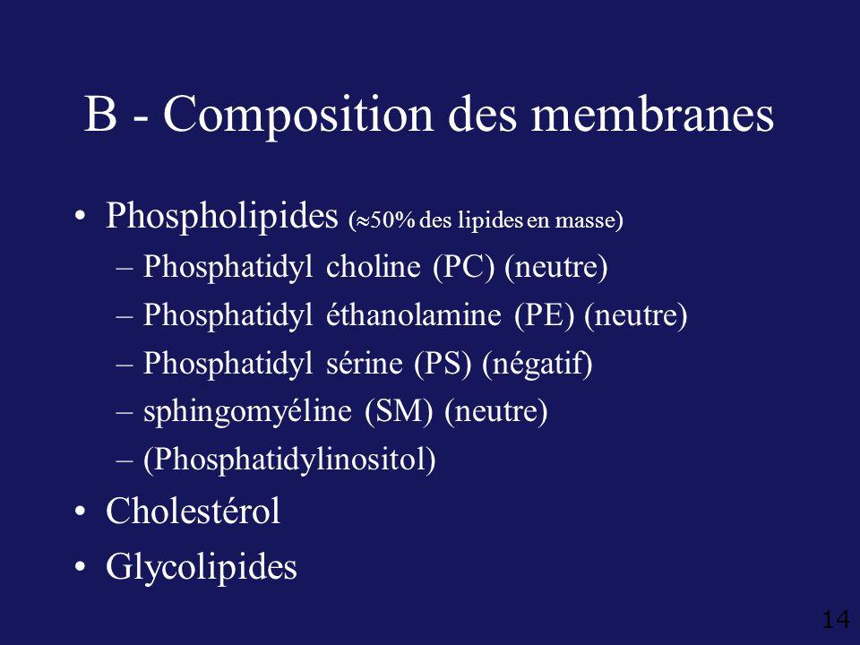 B - Composition des membranes