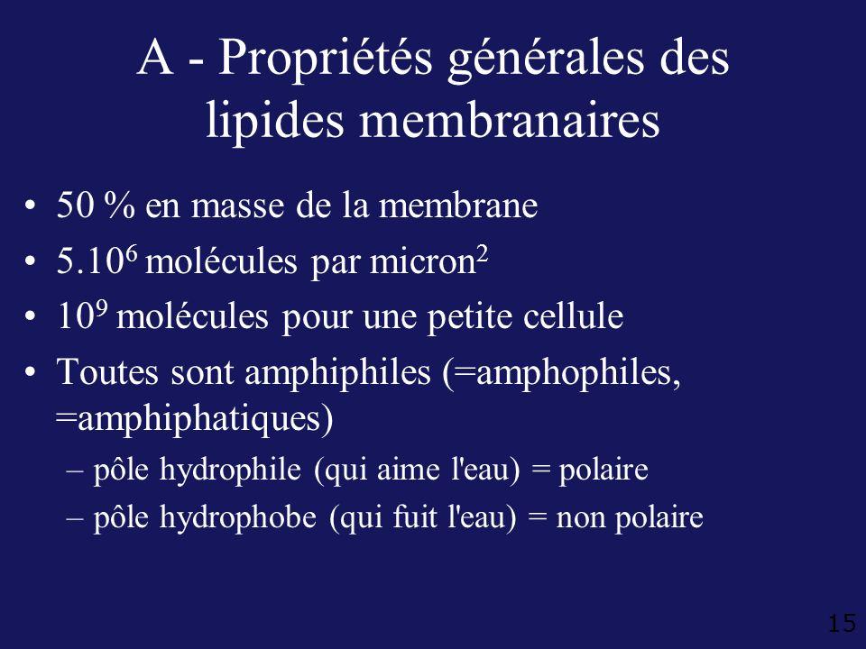 A - Propriétés générales des lipides membranaires