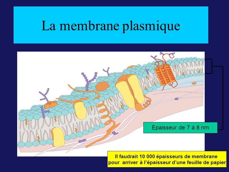 La membrane plasmique Épaisseur de 7 à 8 nm