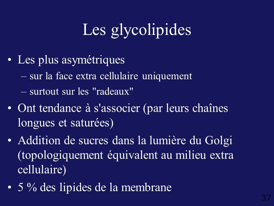 Les glycolipides Les plus asymétriques