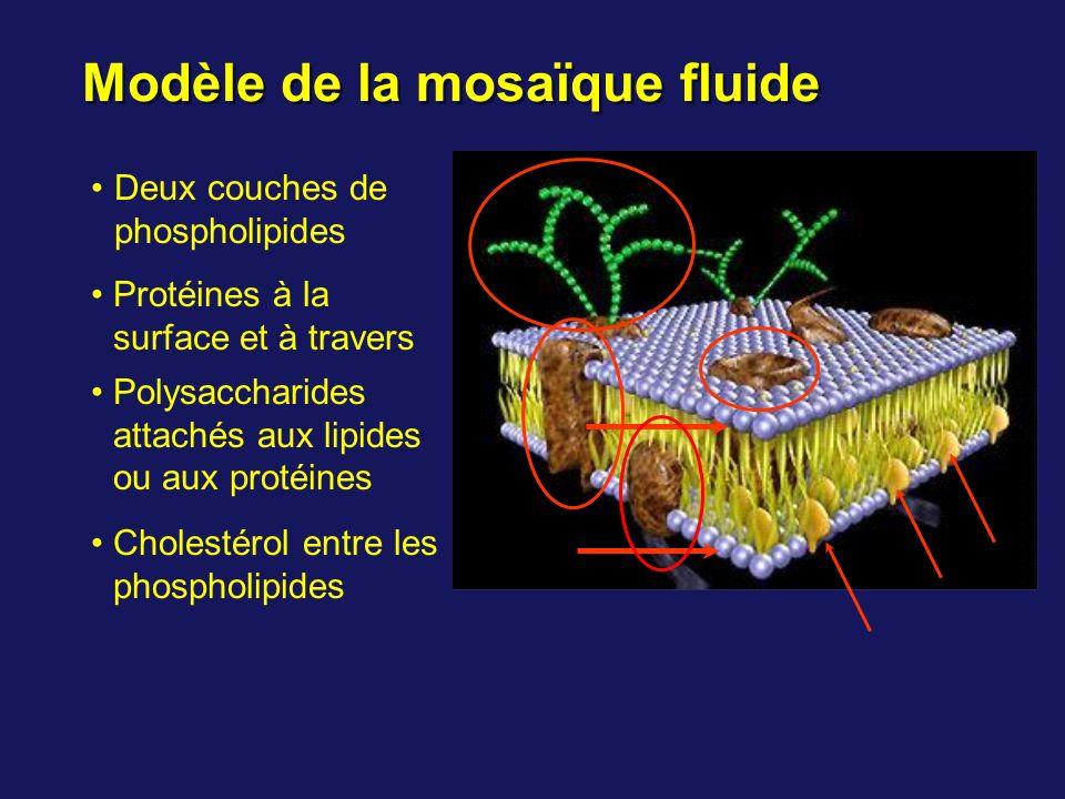 Modèle de la mosaïque fluide