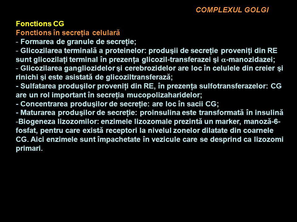 COMPLEXUL GOLGI Fonctions CG. Fonctions în secreţia celulară. Formarea de granule de secreţie;