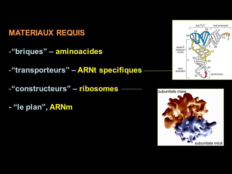 MATERIAUX REQUIS briques – aminoacides. transporteurs – ARNt specifiques. constructeurs – ribosomes.
