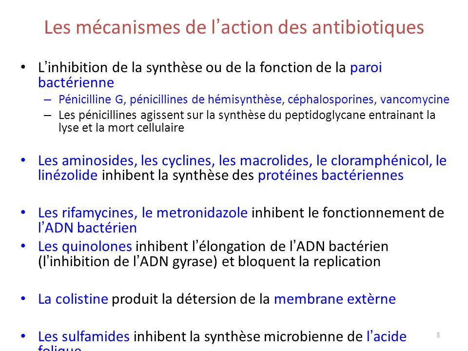 Les mécanismes de l'action des antibiotiques