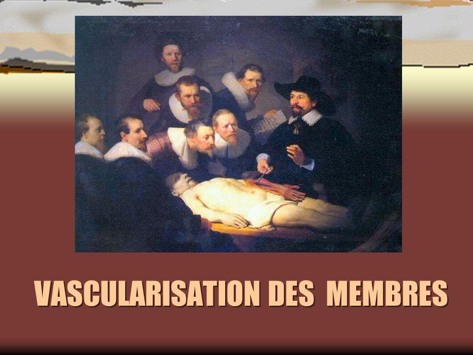 VASCULARISATION DES MEMBRES
