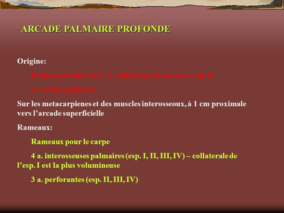 ARCADE PALMAIRE PROFONDE