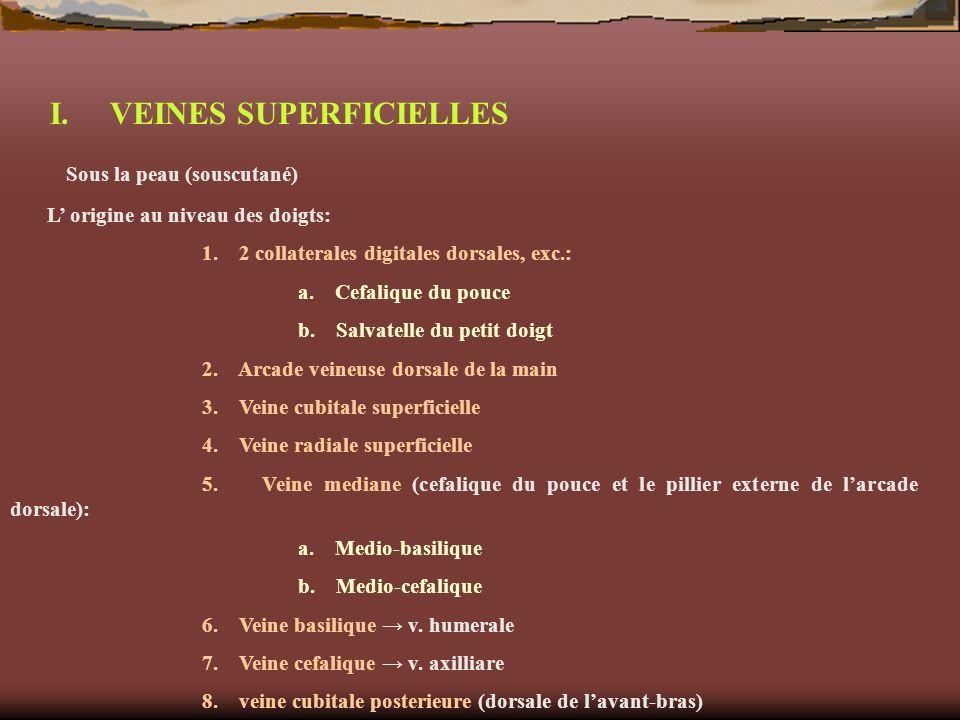 I. VEINES SUPERFICIELLES Sous la peau (souscutané)
