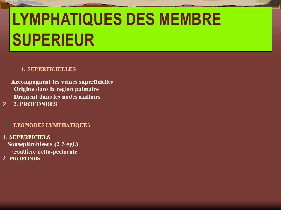 LYMPHATIQUES DES MEMBRE SUPERIEUR