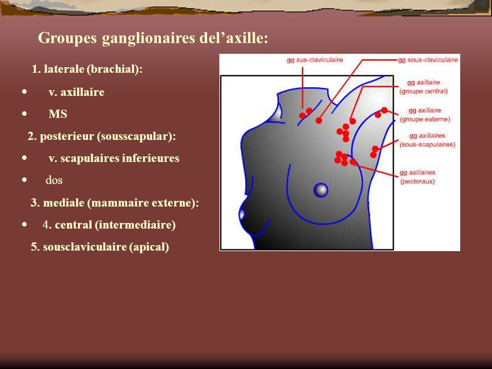 Groupes ganglionaires del'axille: 1. laterale (brachial):