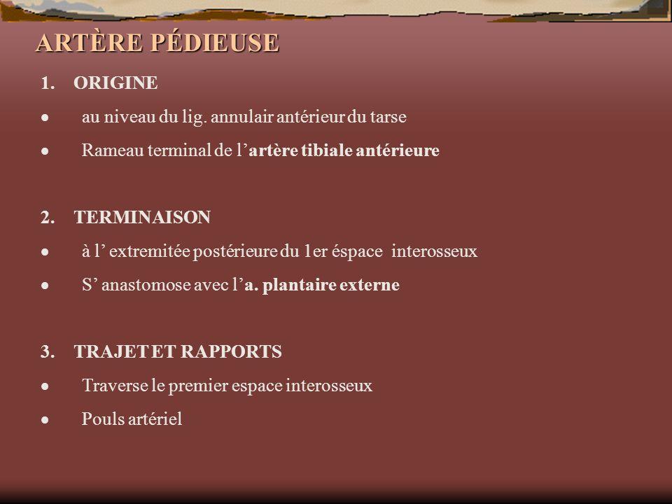 ARTÈRE PÉDIEUSE 1. ORIGINE