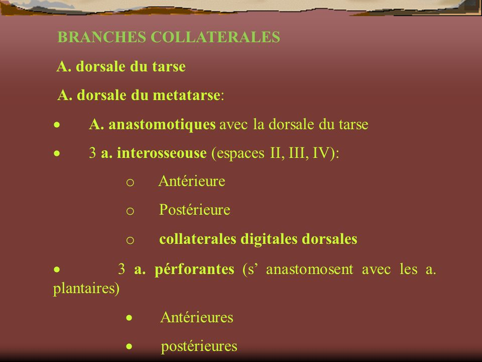 BRANCHES COLLATERALES