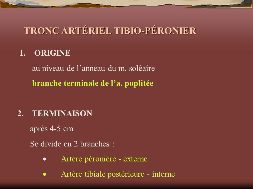 TRONC ARTÉRIEL TIBIO-PÉRONIER