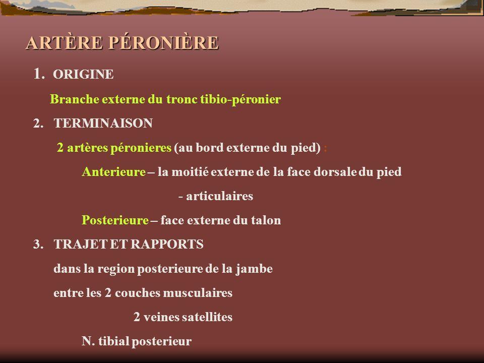 ARTÈRE PÉRONIÈRE 1. ORIGINE Branche externe du tronc tibio-péronier