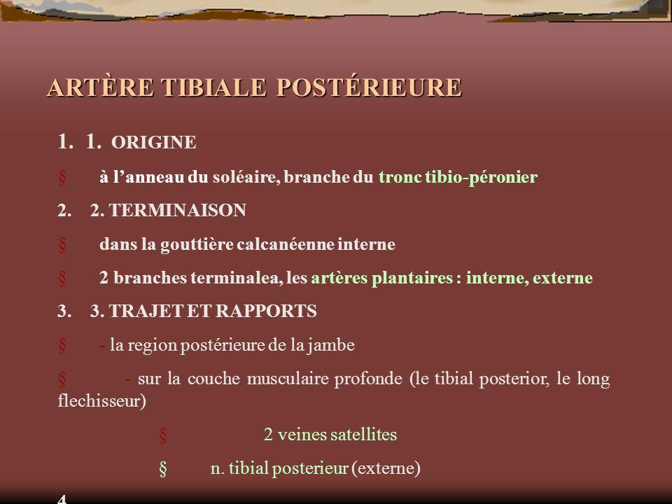 ARTÈRE TIBIALE POSTÉRIEURE