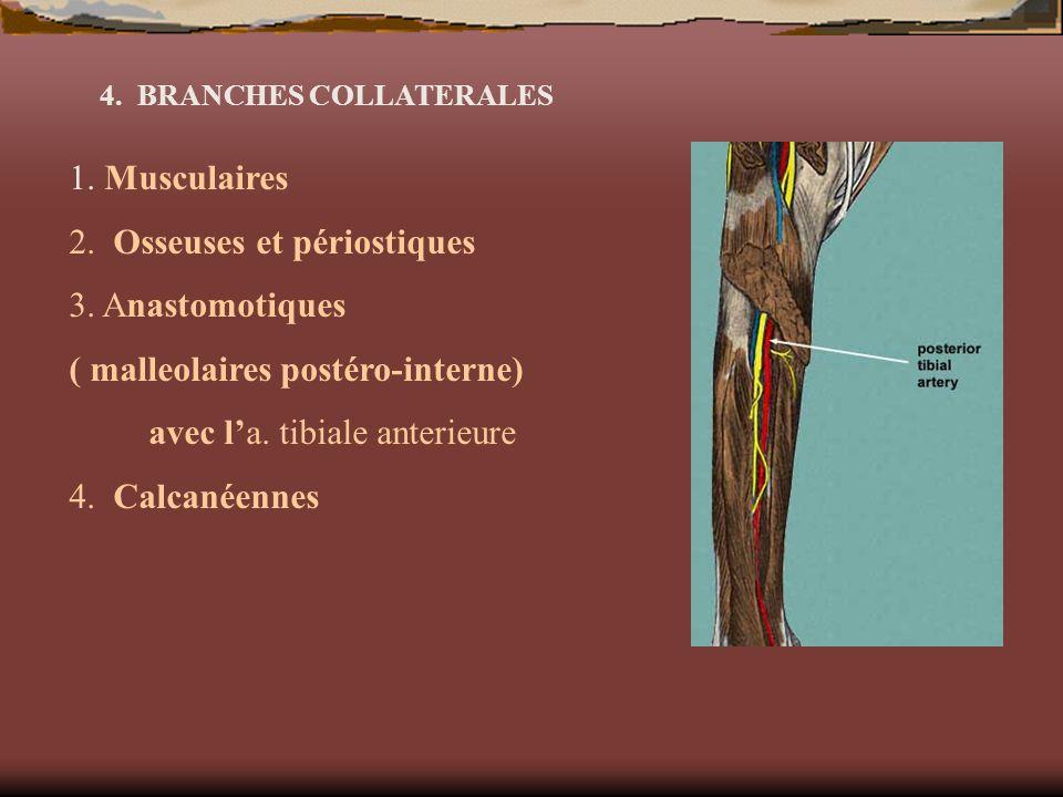 2. Osseuses et périostiques 3. Anastomotiques