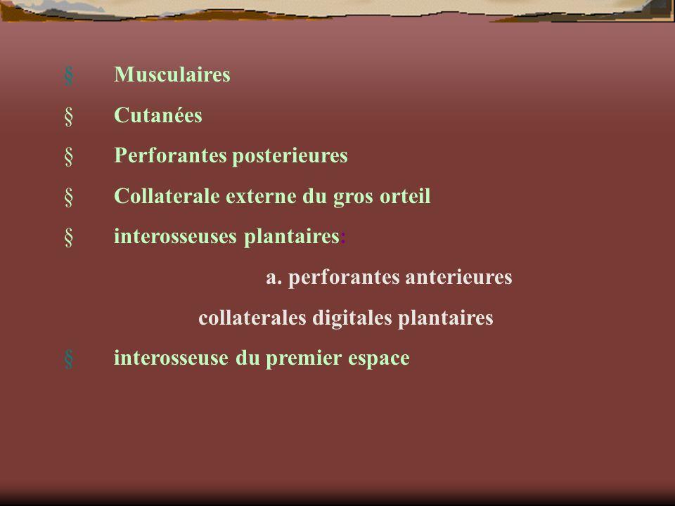 § Musculaires § Cutanées. § Perforantes posterieures. § Collaterale externe du gros orteil.