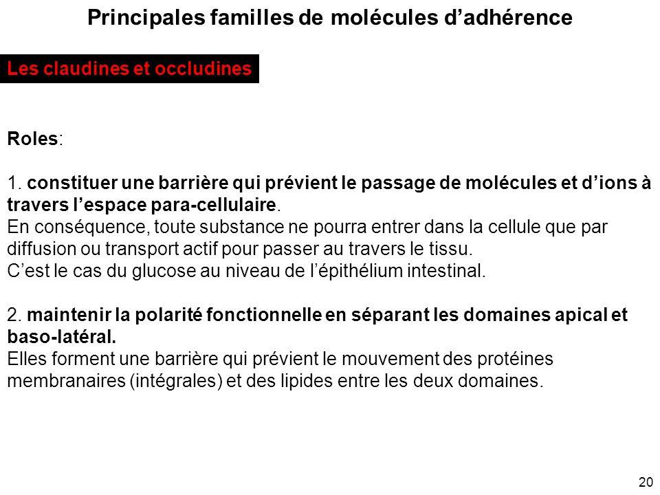 Principales familles de molécules d'adhérence