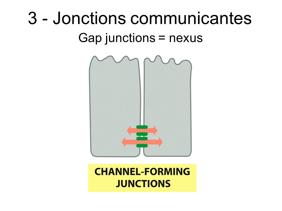 3 - Jonctions communicantes