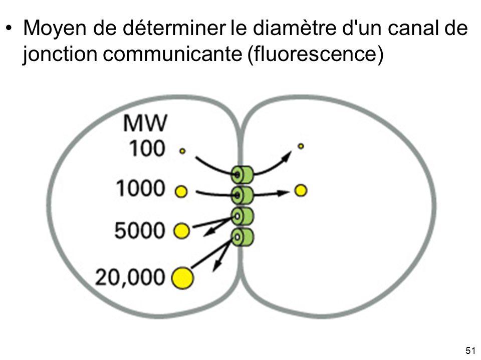 Mardi 20 janvier 2009Moyen de déterminer le diamètre d un canal de jonction communicante (fluorescence)