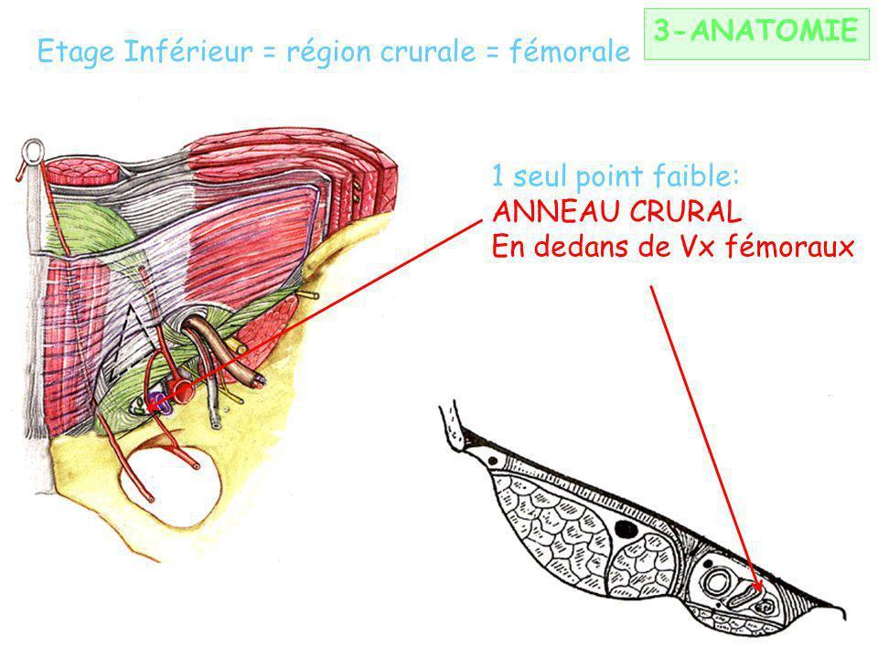Etage Inférieur = région crurale = fémorale