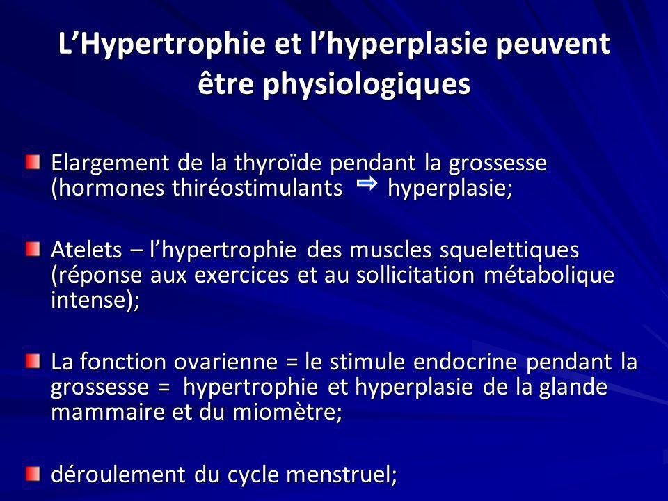 L'Hypertrophie et l'hyperplasie peuvent être physiologiques