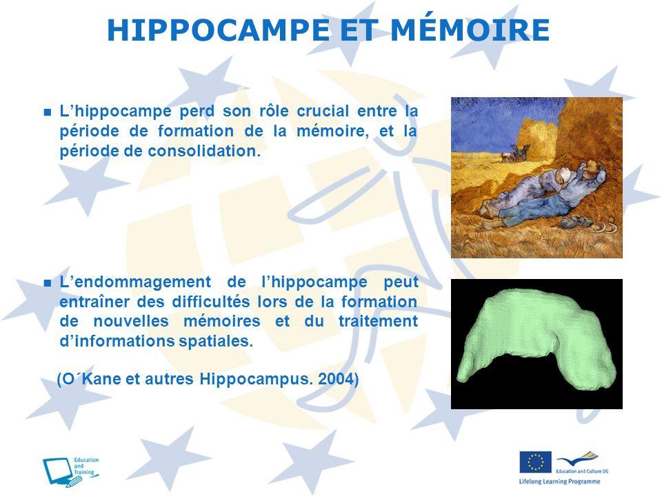 HIPPOCAMPE ET MÉMOIRE L'hippocampe perd son rôle crucial entre la période de formation de la mémoire, et la période de consolidation.