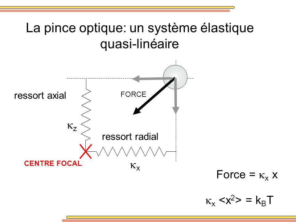 La pince optique: un système élastique quasi-linéaire