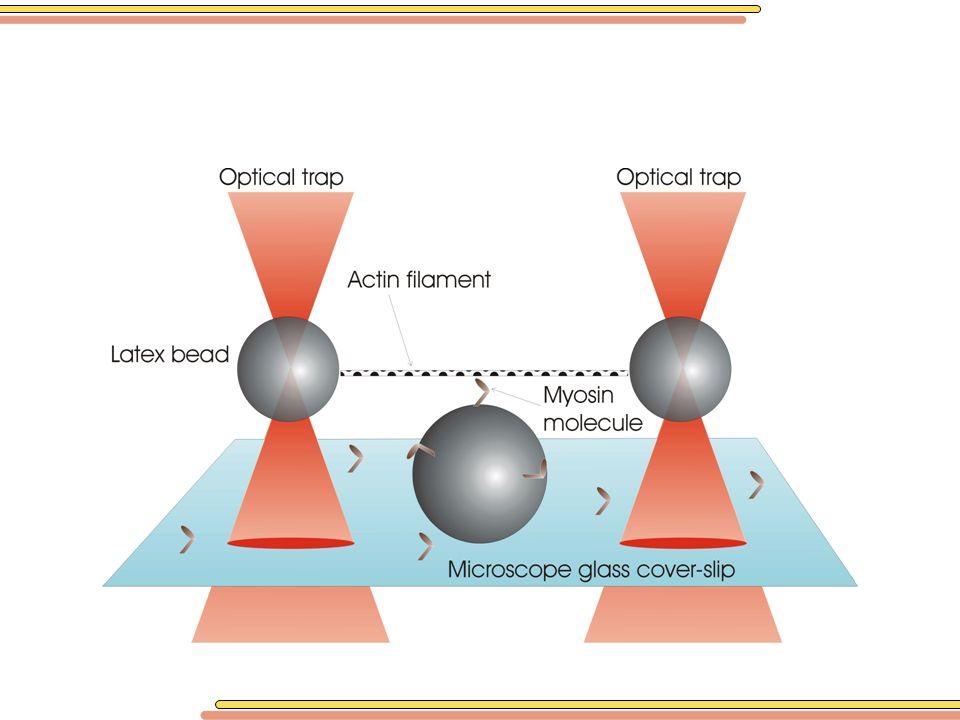 Notre expérience consiste à tenir pas une seule bille mais 2 billes chacune dans une pince optique.