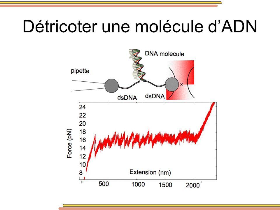 Détricoter une molécule d'ADN