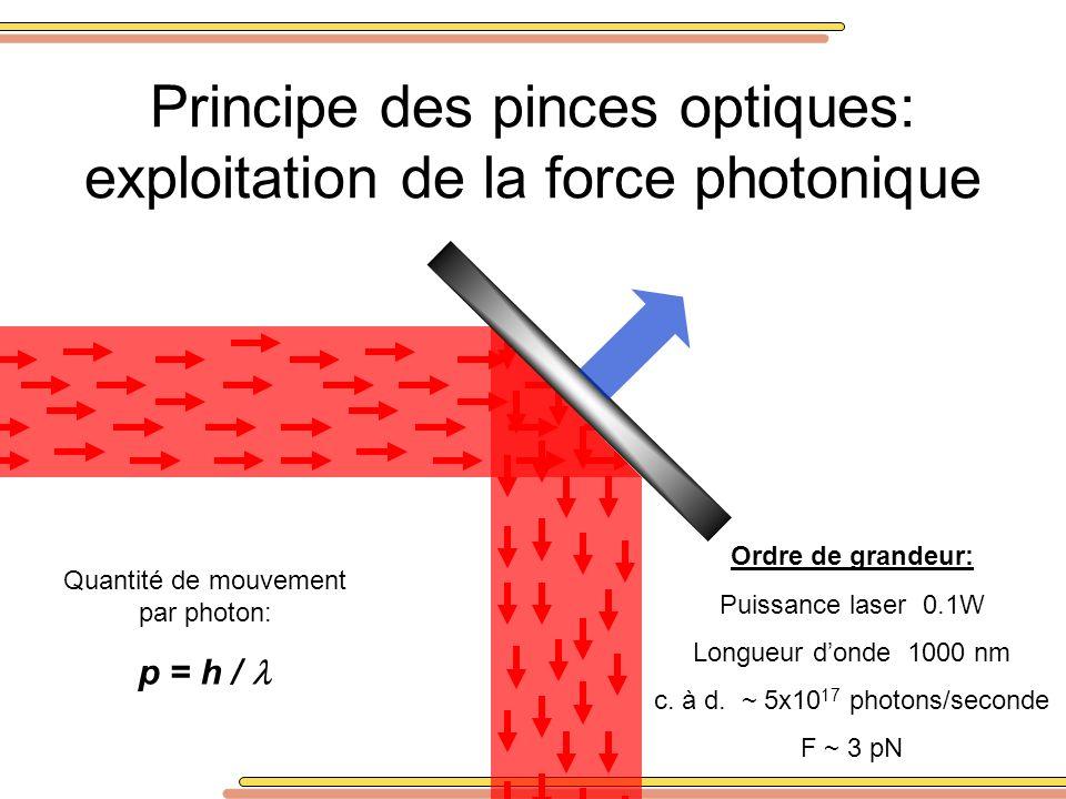 Principe des pinces optiques: exploitation de la force photonique