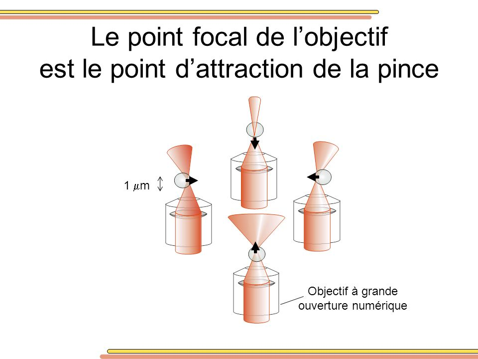 Le point focal de l'objectif est le point d'attraction de la pince