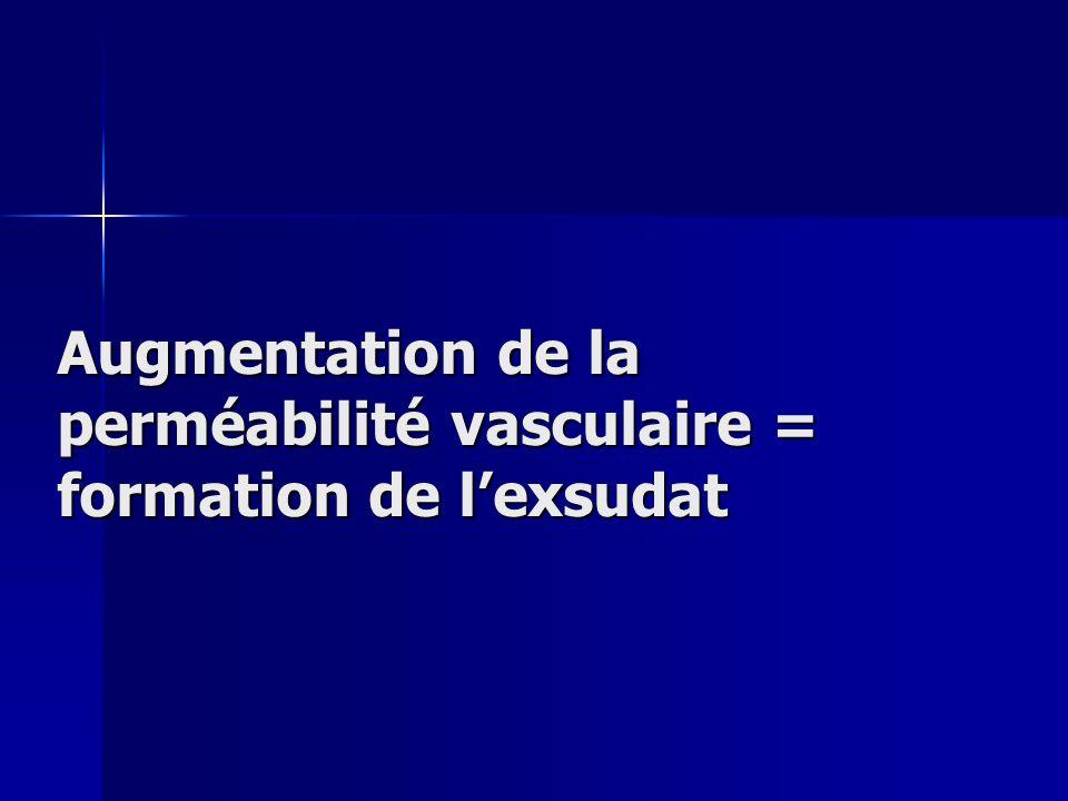 Augmentation de la perméabilité vasculaire = formation de l'exsudat