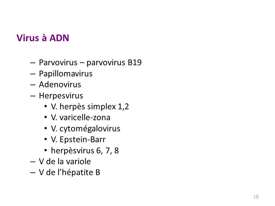 Virus à ADN Parvovirus – parvovirus B19 Papillomavirus Adenovirus
