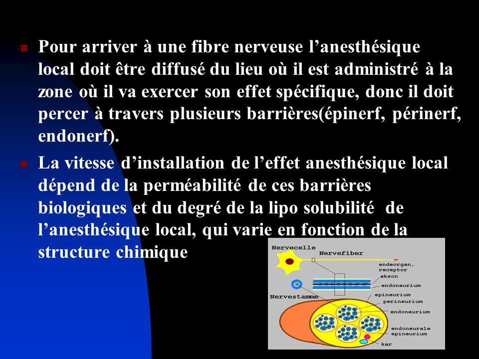 Pour arriver à une fibre nerveuse l'anesthésique local doit être diffusé du lieu où il est administré à la zone où il va exercer son effet spécifique, donc il doit percer à travers plusieurs barrières(épinerf, périnerf, endonerf).