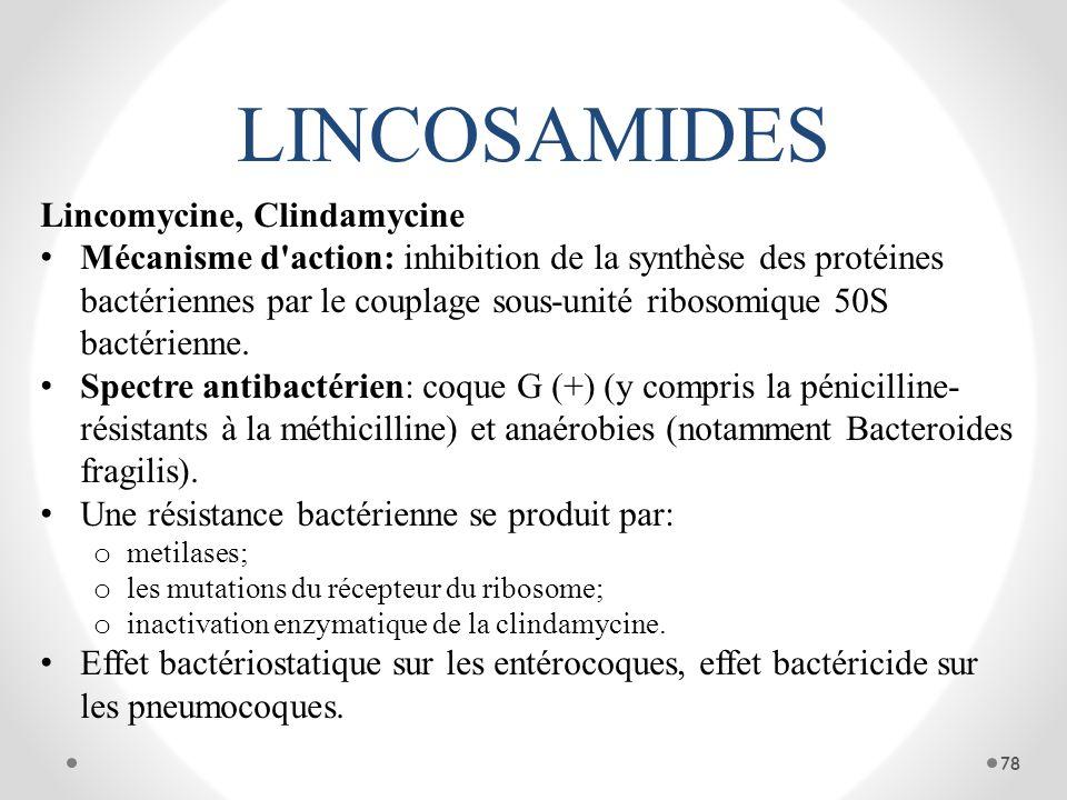 LINCOSAMIDES Lincomycine, Clindamycine