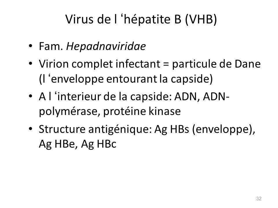 Virus de l 'hépatite B (VHB)