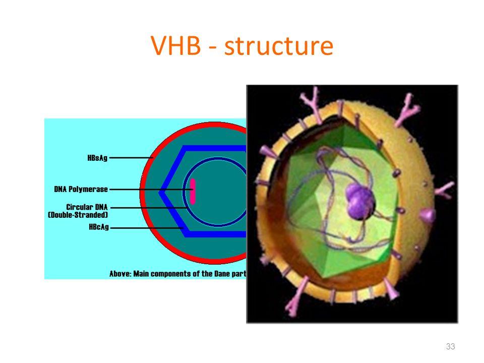 VHB - structure