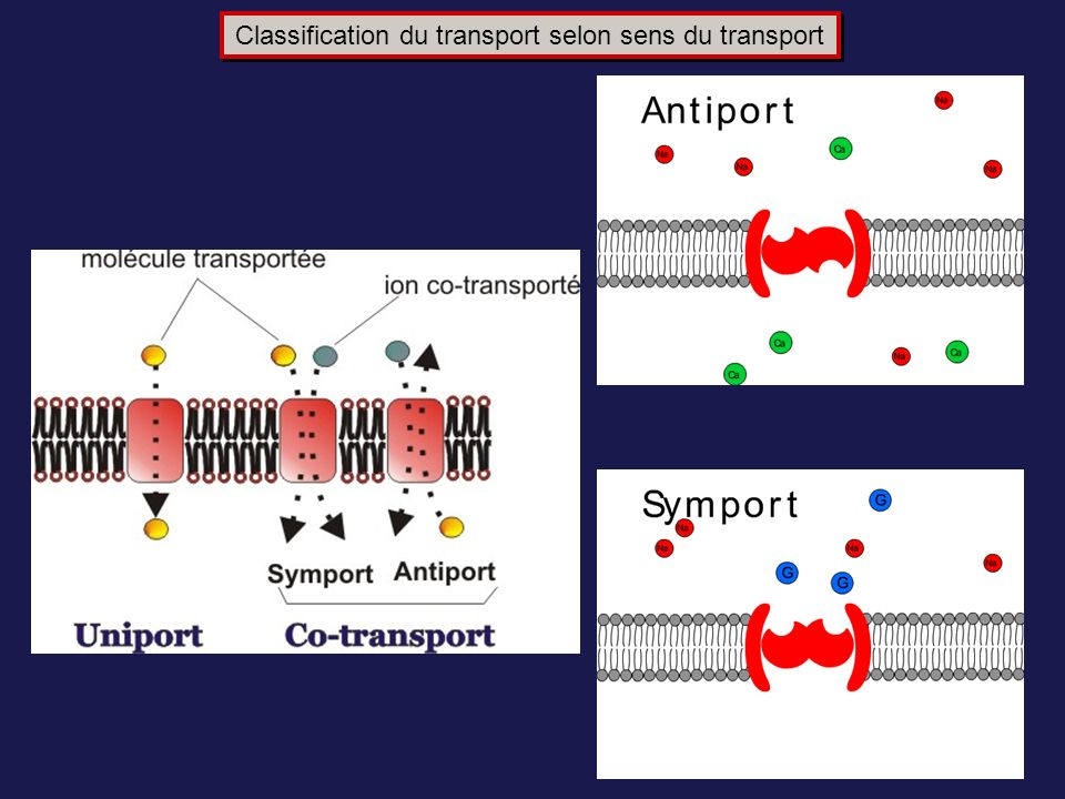 Classification du transport selon sens du transport