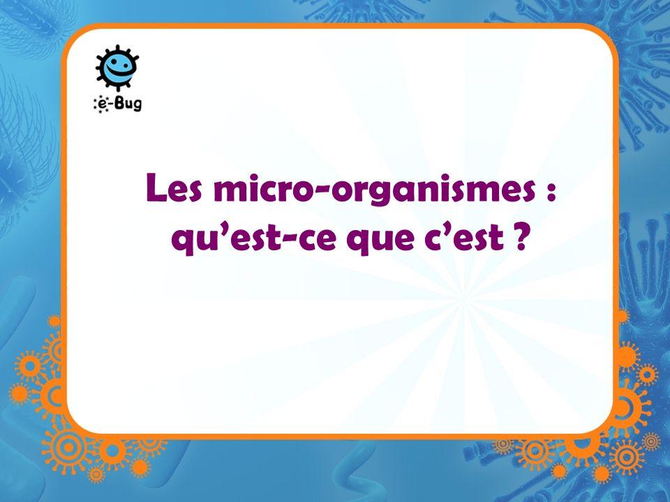 Les micro-organismes : qu'est-ce que c'est