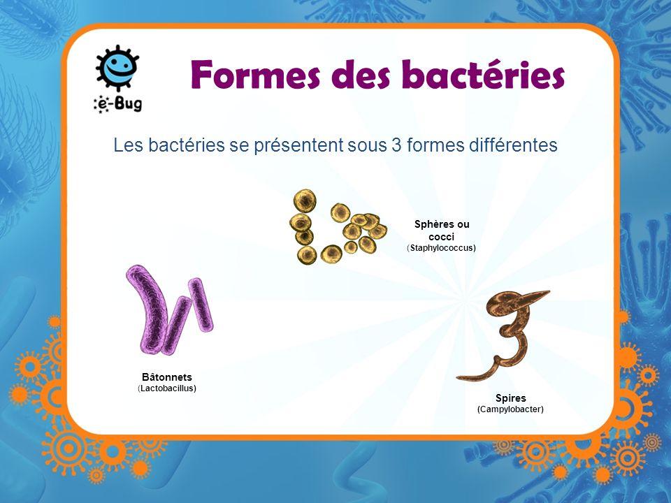Les bactéries se présentent sous 3 formes différentes