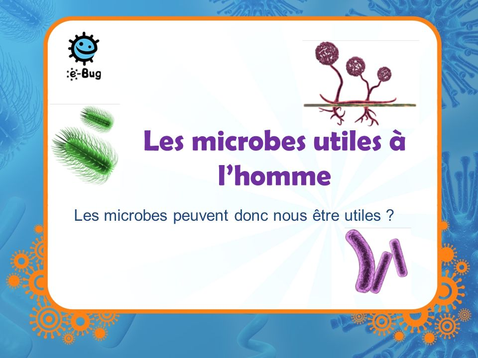 Les microbes utiles à l'homme