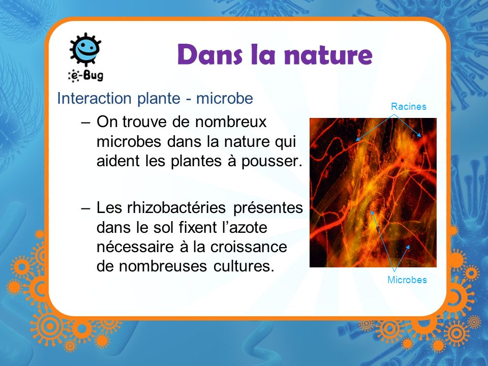 Dans la nature Interaction plante - microbe