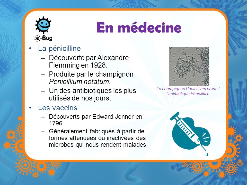 Le champignon Penicillium produit l'antibiotique Pénicilline
